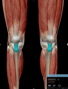 膝蓋腱炎2